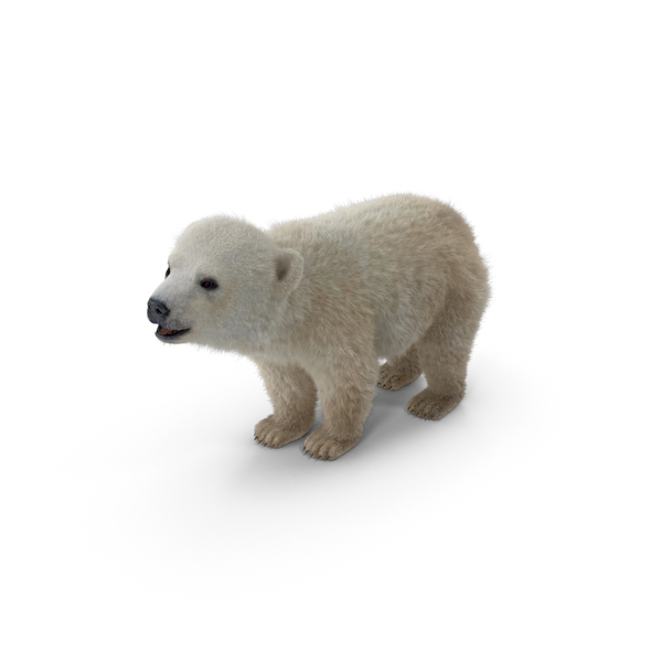 Baby Polar Bear Png Images Psds For Download Pixelsquid S107207255 We upload amazing new content everyday! pixelsquid