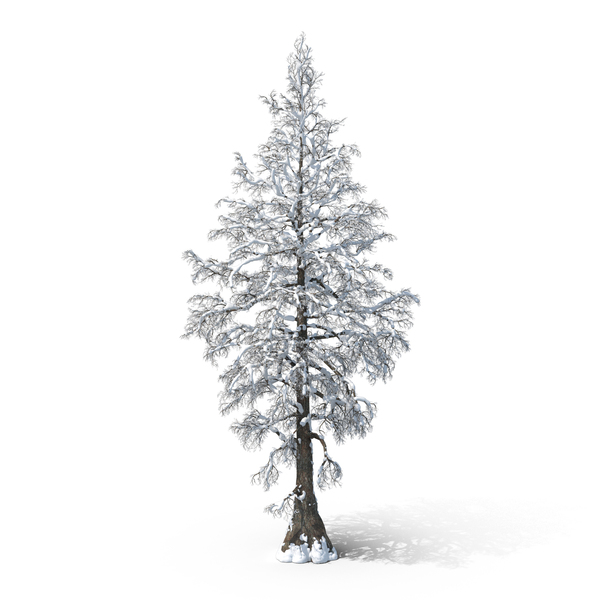 Bare Snow Tree PNG PSD