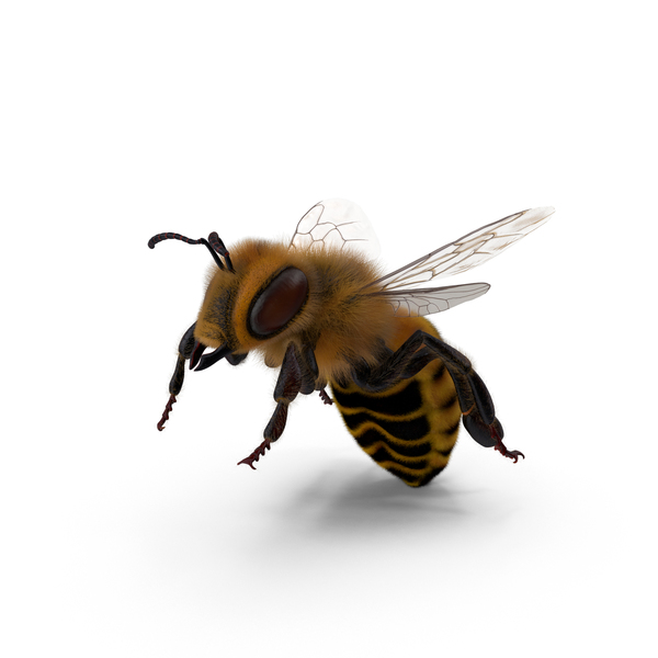 Bee Png Images Psds For Download Pixelsquid S10597198d Bee png cliparts, all these png images has no background, free & unlimited downloads. pixelsquid