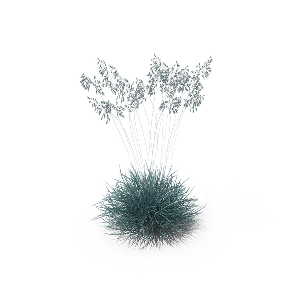 blue fescue png images amp psds for download pixelsquid