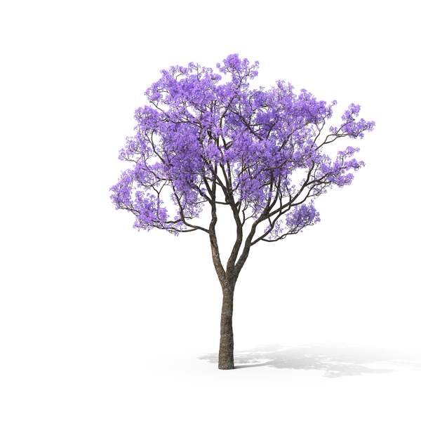 Blue Jacaranda PNG Images Amp PSDs For Download PixelSquid