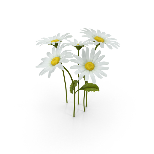 Daisies Png Images Amp Psds For Download Pixelsquid