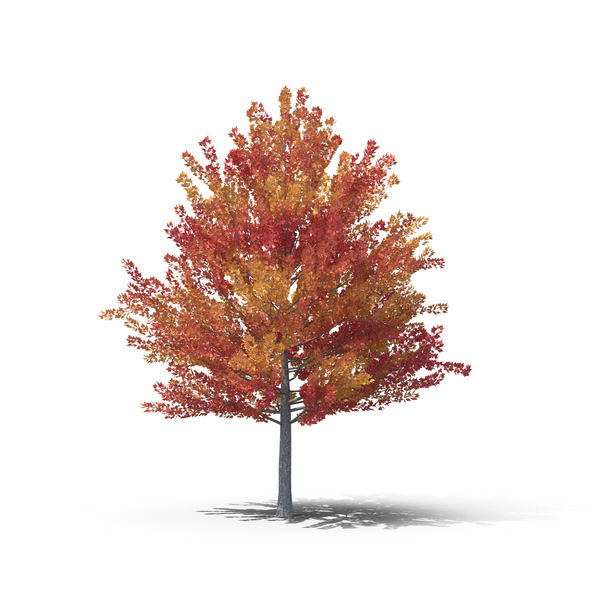 Fall Tree PNG Images & PSDs For Download