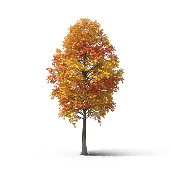 Fall Tree Png Images Amp Psds For Download Pixelsquid