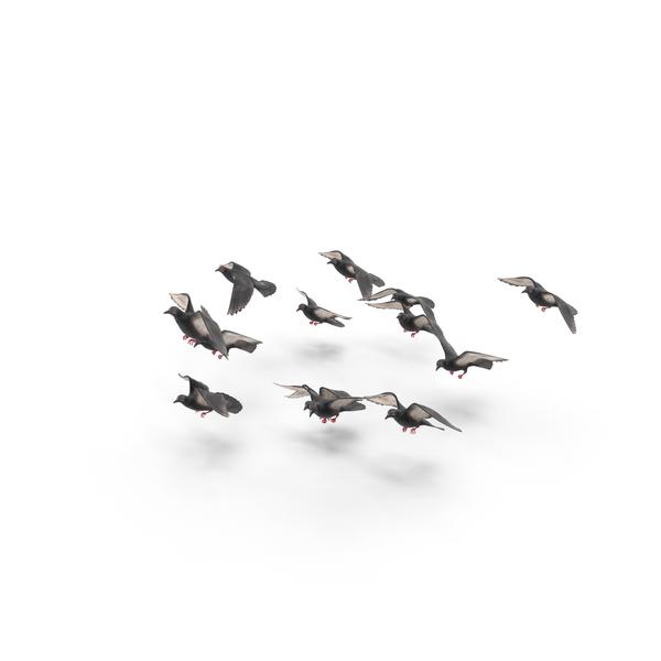 Flocking Birds PNG Images & PSDs for Download   PixelSquid - S11157357E