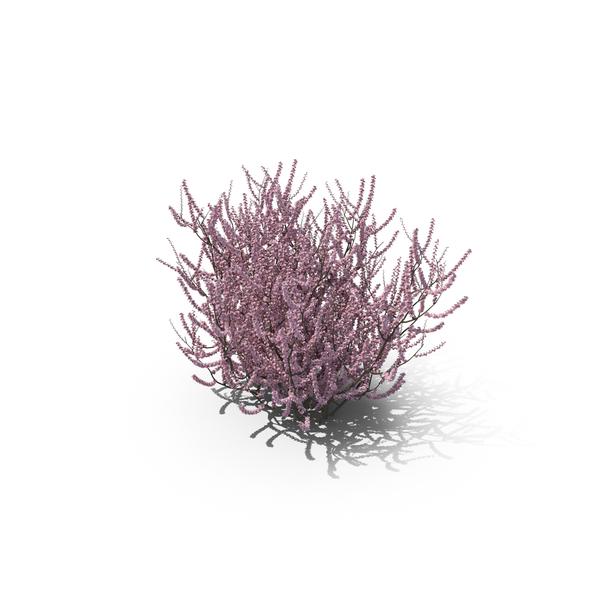 Flowering Almond Bush Png Images Amp Psds For Download