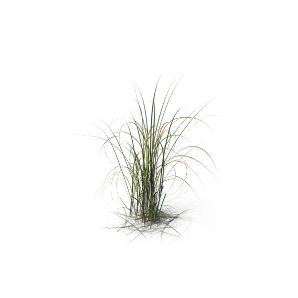 Giant miscanthus png images psds for download for Giant ornamental grass