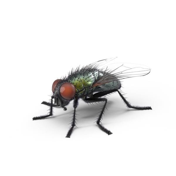 Green Fly PNG Images & PSDs for Download | PixelSquid