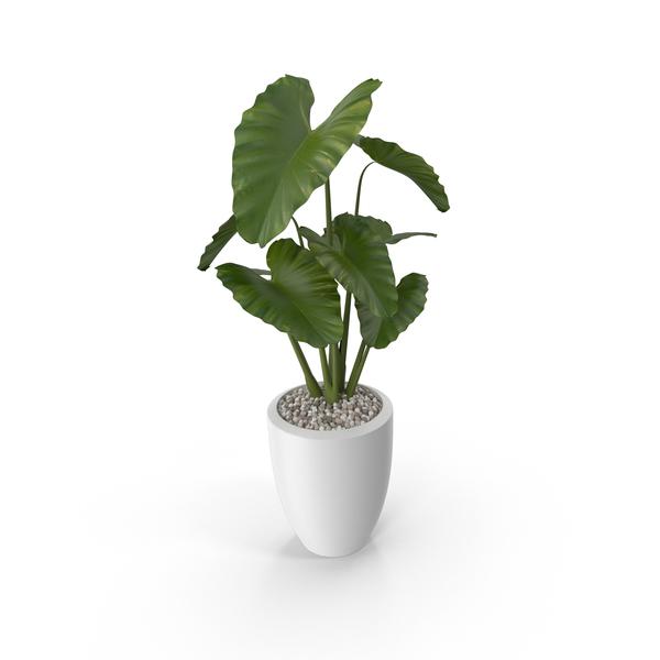 Plants In Living Room Pots Planters