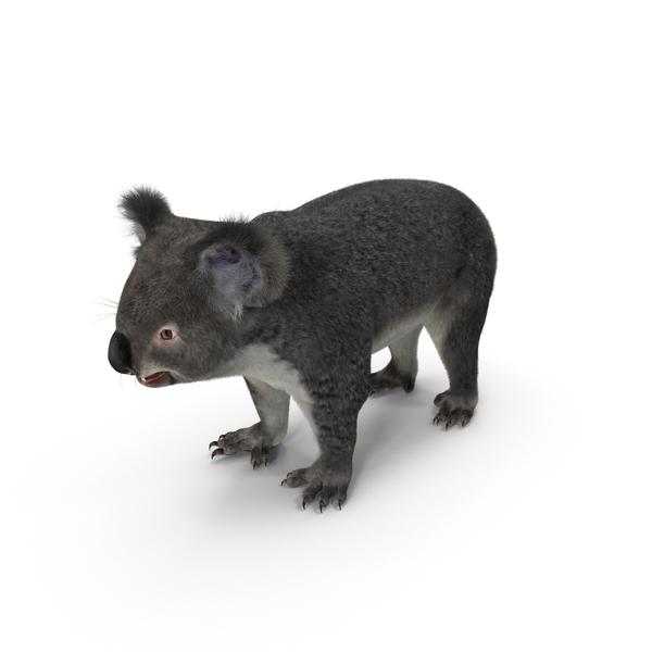 Koala PNG Images & PSDs For Download