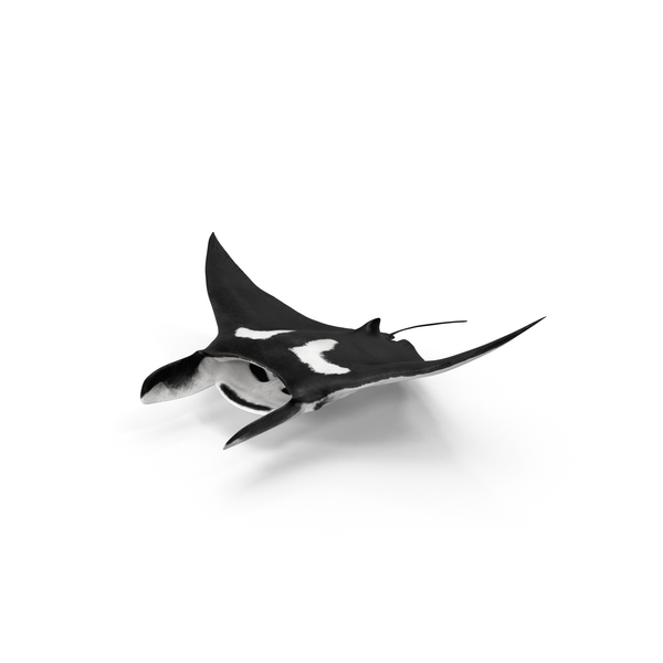 Manta Ray Png Images Psds For Download Pixelsquid S111231280