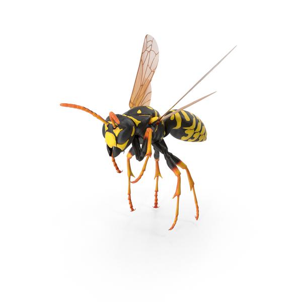 Paper Wasp PNG Images & PSDs for Download | PixelSquid