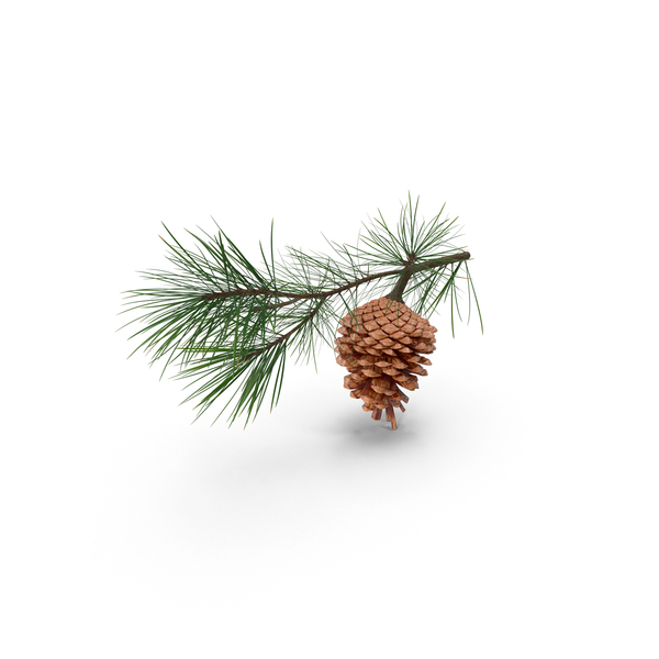 Pine Needle Christmas Tree