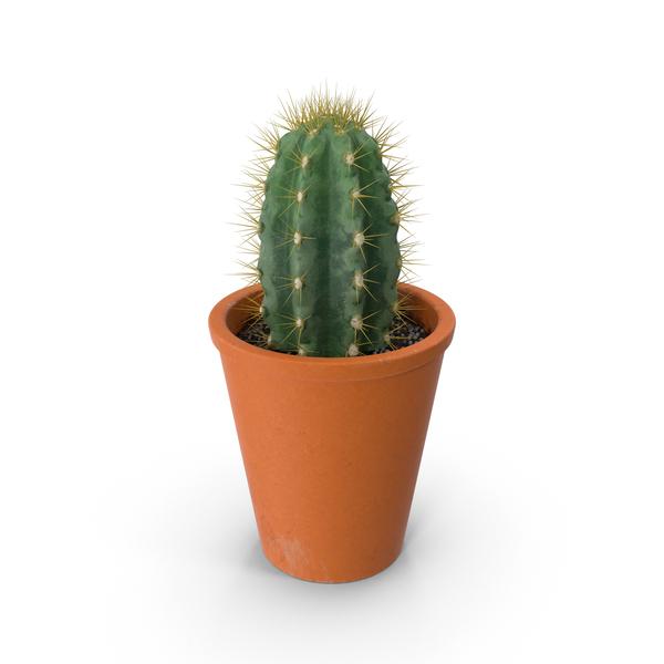 potted cactus png images  u0026 psds for download