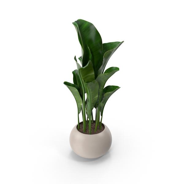 Potted Plant PNG Images amp PSDs for Download PixelSquid