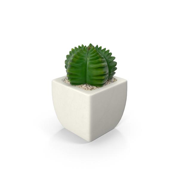 Desk Plant Decor