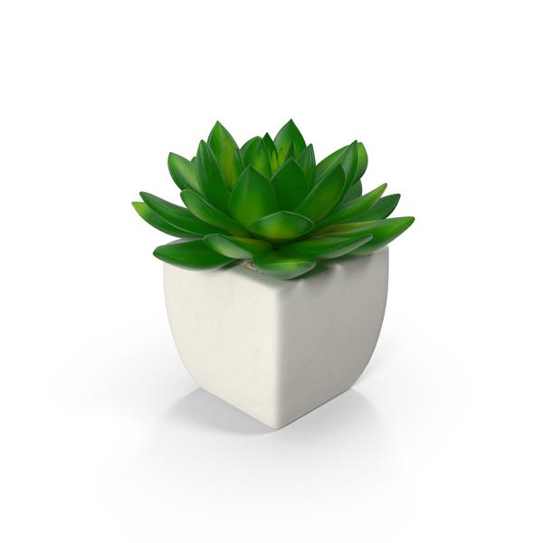 Potted Succulent Plant Png Images Amp Psds For Download
