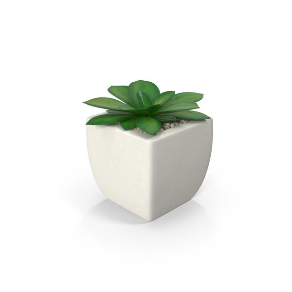 potted succulent plant png images  u0026 psds for download