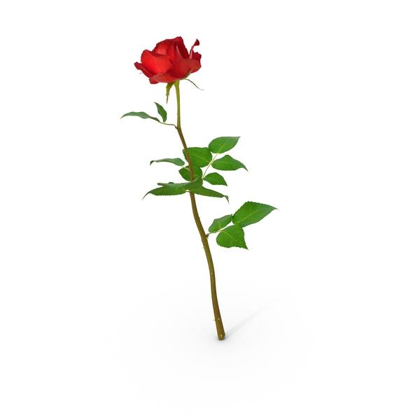 Rose Png Images Psds For Download Pixelsquid S100014754