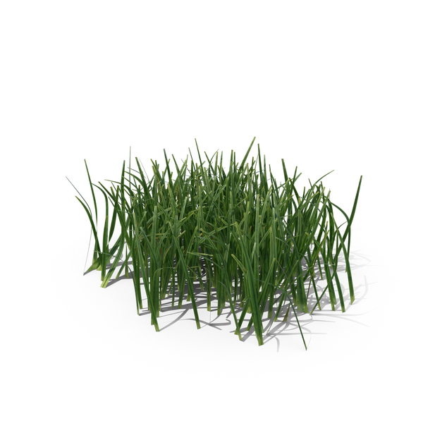 Simple Grass Small Png Images Amp Psds For Download