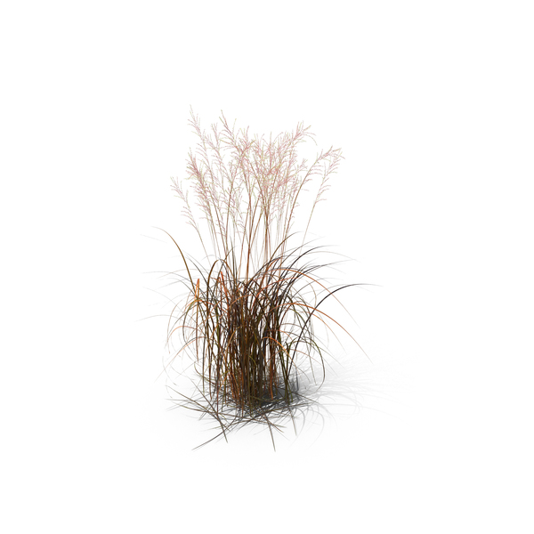 tall moor grass png images  u0026 psds for download