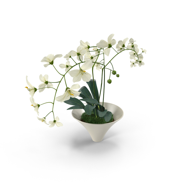 White Flowers In White Pot Png Images Amp Psds For Download