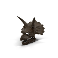 Triceratops Skull Fossil PNG & PSD Images