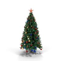 Douglas Fir Tree PNG & PSD Images