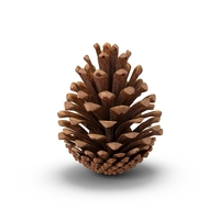 Fir Cone PNG & PSD Images