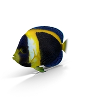 Scribbled Angelfish PNG & PSD Images