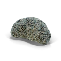 Brain Coral PNG & PSD Images