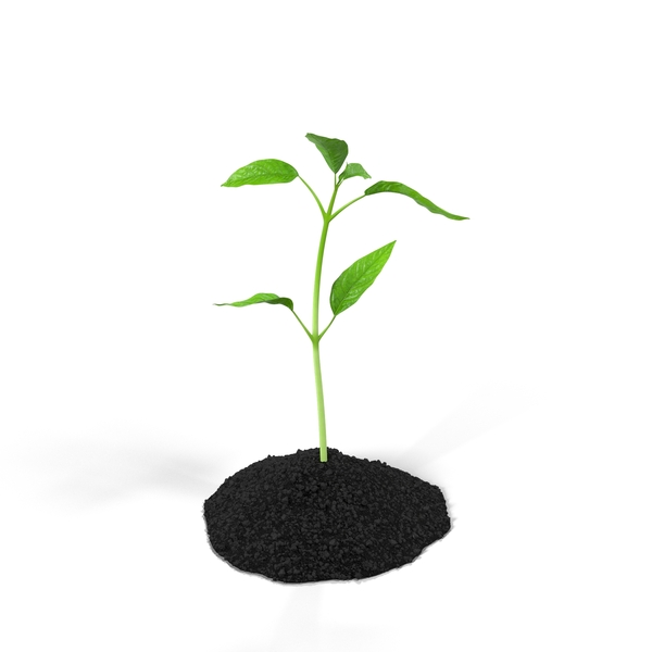 Plant Sprout  Object