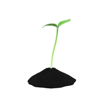 Young Plant Sprout PNG & PSD Images