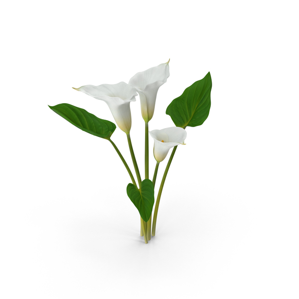 Calla Lily Object