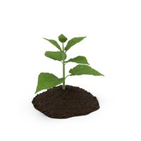 Plant Sprout PNG & PSD Images