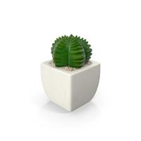 Potted Succulent Plant PNG & PSD Images