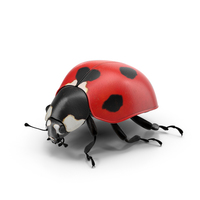 Ladybug PNG & PSD Images
