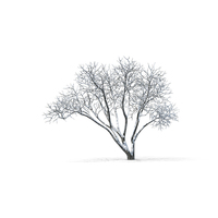 Bare Tree Object