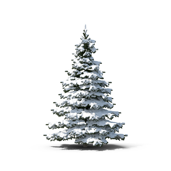 Evergreen Tree Covered in Snow Object