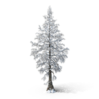 Bare Snow Tree PNG & PSD Images