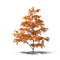 Tree in Fall PNG & PSD Images