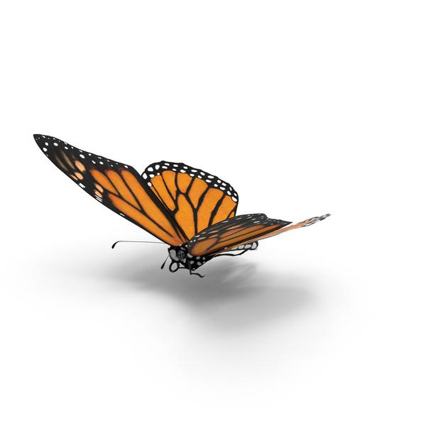Monarch Butterfly Object