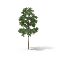 Bullet Tree PNG & PSD Images