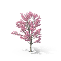 Pink Shower Tree PNG & PSD Images
