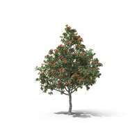 Geiger Tree PNG & PSD Images