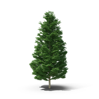 Leyland Cypress PNG & PSD Images