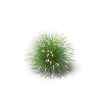 Fountain Grass PNG & PSD Images