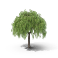 American Pepper Tree PNG & PSD Images