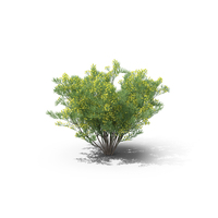 Silver Cassia PNG & PSD Images