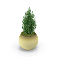 Thyme PNG & PSD Images